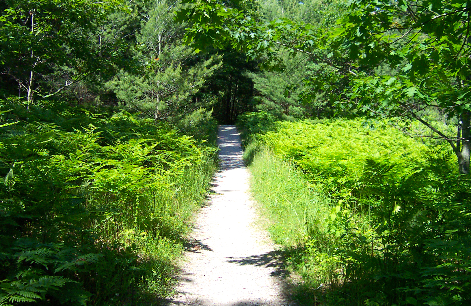 Trail through the green woods on South Manitou Island