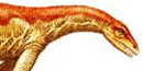 Anchisaurus Polyzelus