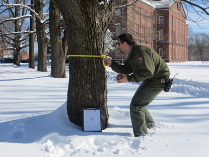 Springfield Armory NHS Arborist inspects trees on site