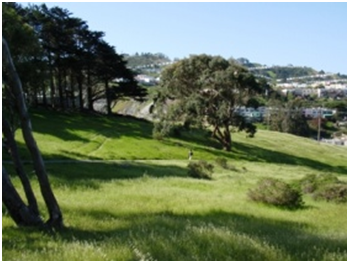 Rolling hills and meadows in San Francisco's John McLaren Park