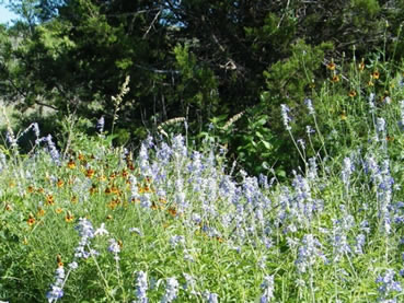 Wildflowers bloom at Dahlstrom Ranch.
