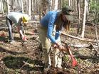 Volunteers work on the Ester Dome mountain bike trail.