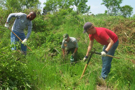 Three people cutting and spraying invasive plants.