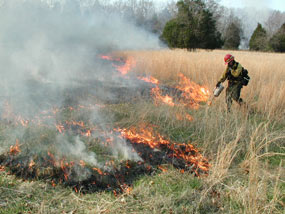A firefighter lights a prescribed fire in a field of native grasses.