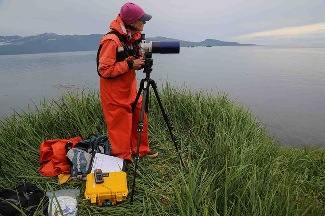 Researcher observing sea otters