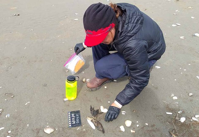 A researcher documents the carcass of a seabird on the beach.