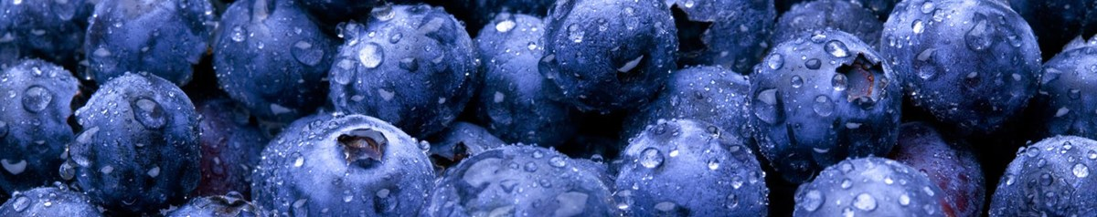 Blueberries with sparkling water drops.