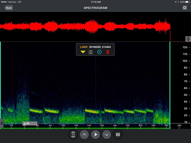 spectrogram of silver-haired bat
