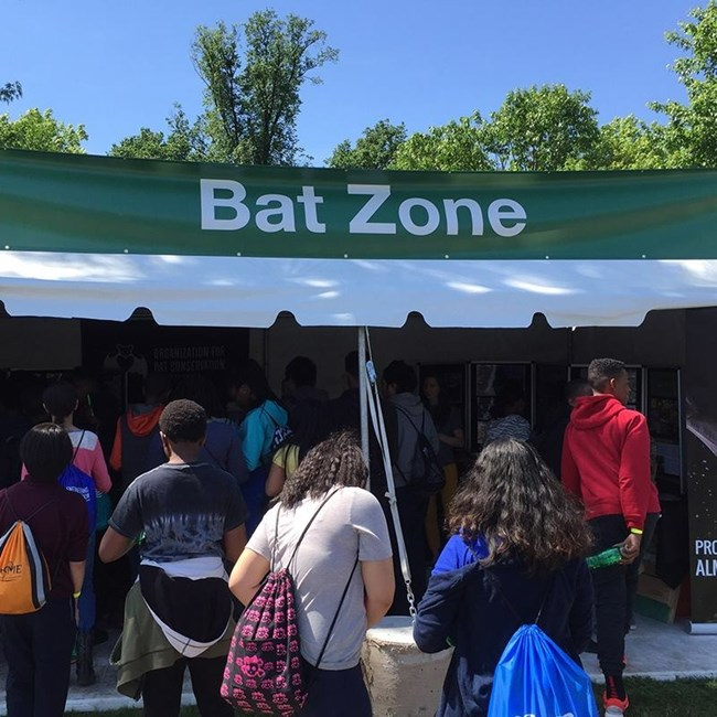 bat zone at bioblitz 2016