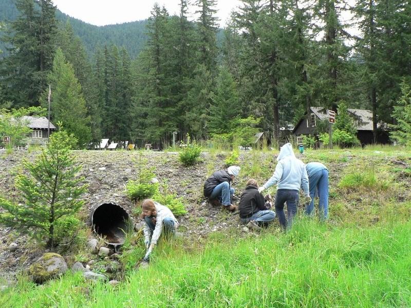 Students Pull Invasive Species At Mount Rainier