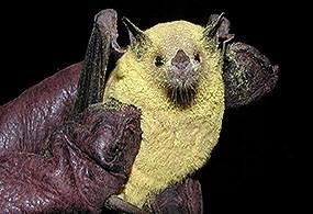 Benefits Of Bats