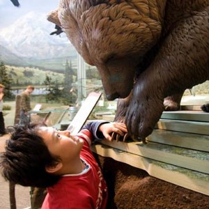 Boy touching brown bear statue in visitor center exhibit