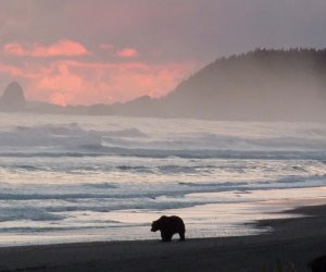 Bear at sunset