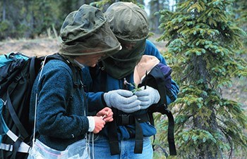 Botanists study plants in Alaska.