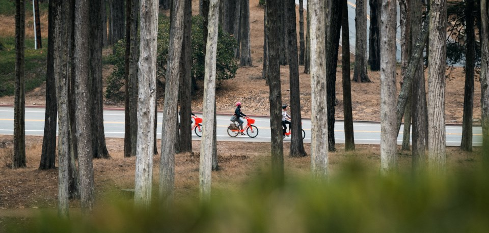 View looking through trees at three people riding orange e-bikes