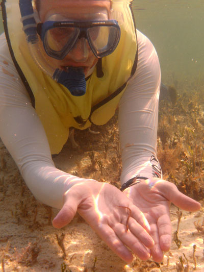 An underwater search for species at 2010 BioBlitz at Biscayne National Park