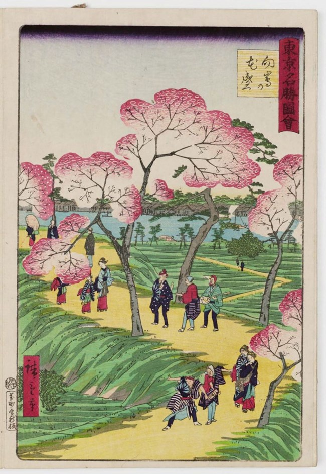 Historic Japanese Image of people observing the cherry blossoms