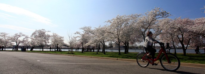 Biker enjoying a spring ride along Hains Point