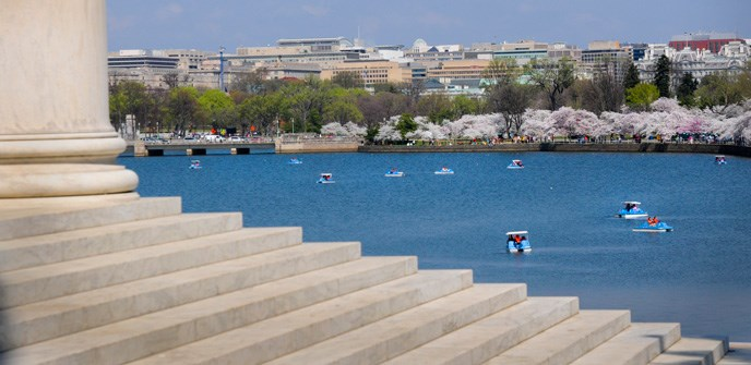 Spring on the tidal basin