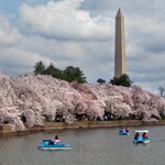 Paddle boats on the Tidal Basin