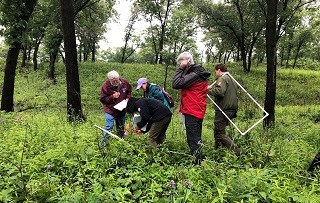 a group of researchers bend and examine vegetation