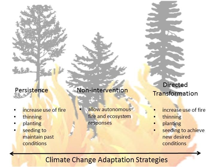 graphic showing adaptation strategies