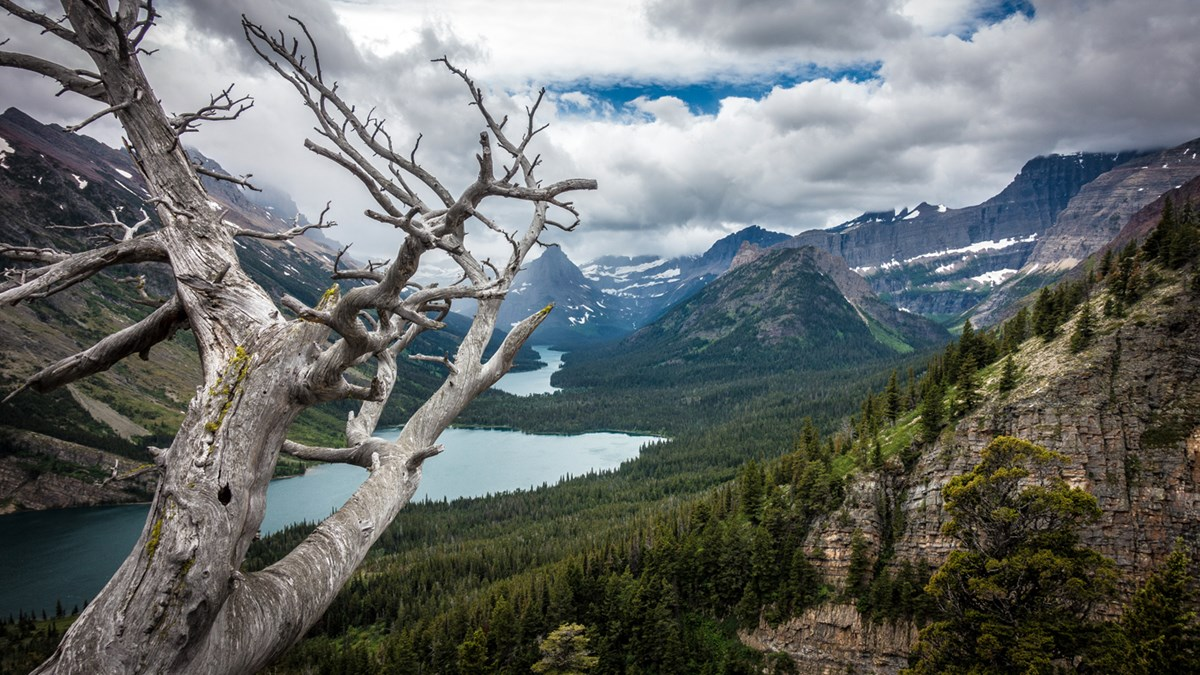 View overlooking forested mountain valley on a cloudy day. Snowcapped peaks surround lakes, with dead tree with gray-white bark in foreground