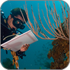 Scientist studying coral reef