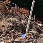 A thermometer sticks out of a pile of compost.