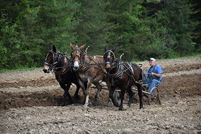 A team of three horses pulls a man on a plow through the soil of a field.
