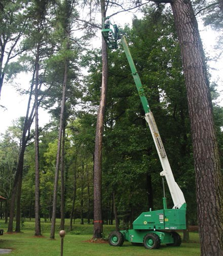 A worker used machinery to access high treetops in order to remove a dead tree.