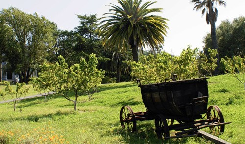 Wagon in a sunny peach orchard