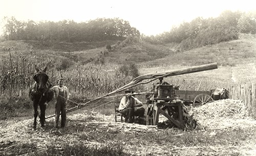 Seated farmer and his son grind sorghum cane in a field using a mule and a wooden mill