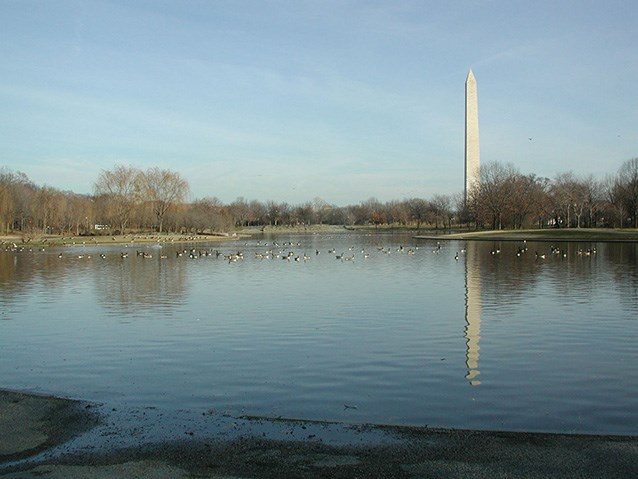 Ducks and geese swim across the surface of the Constitution Gardens Lake. The Washington Monument is visible at a distance and within the glassy reflection of the lake.