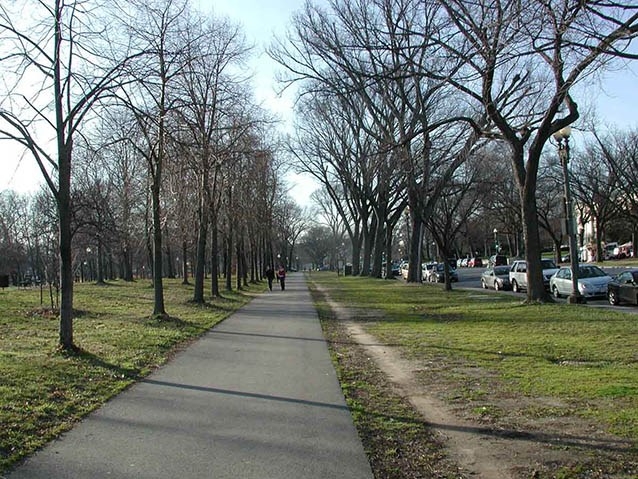 The asphalt walk along Constitution Avenue is flanked on either side by an alee of deciduous trees.