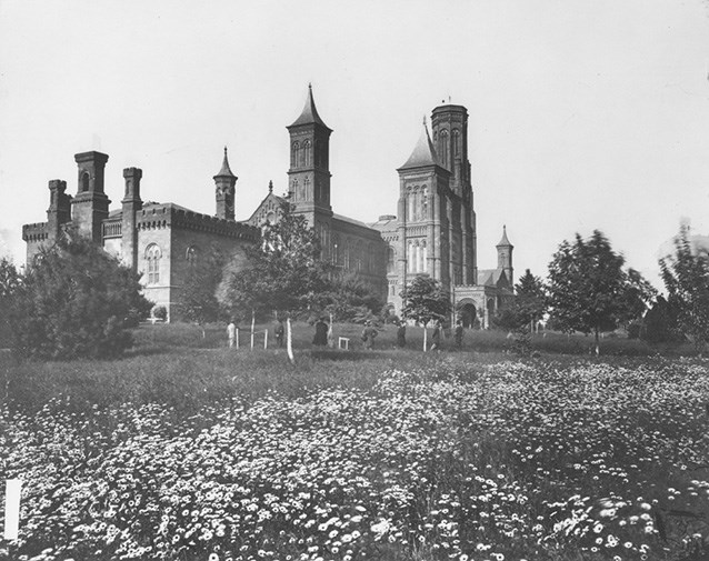 The towers of the Smithsonian Castle rise beyond young trees and a field of flowers.