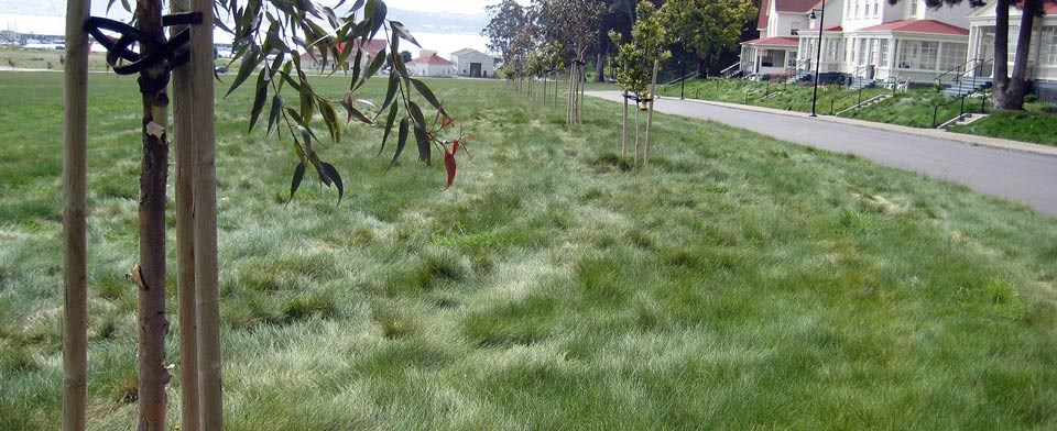 Soft grass on the rehabilitated parade ground at Fort Baker