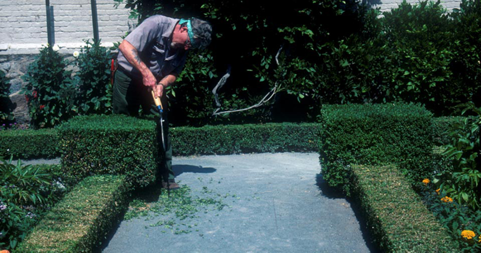 A man prunes symmetrical boxwood hedges with shears.