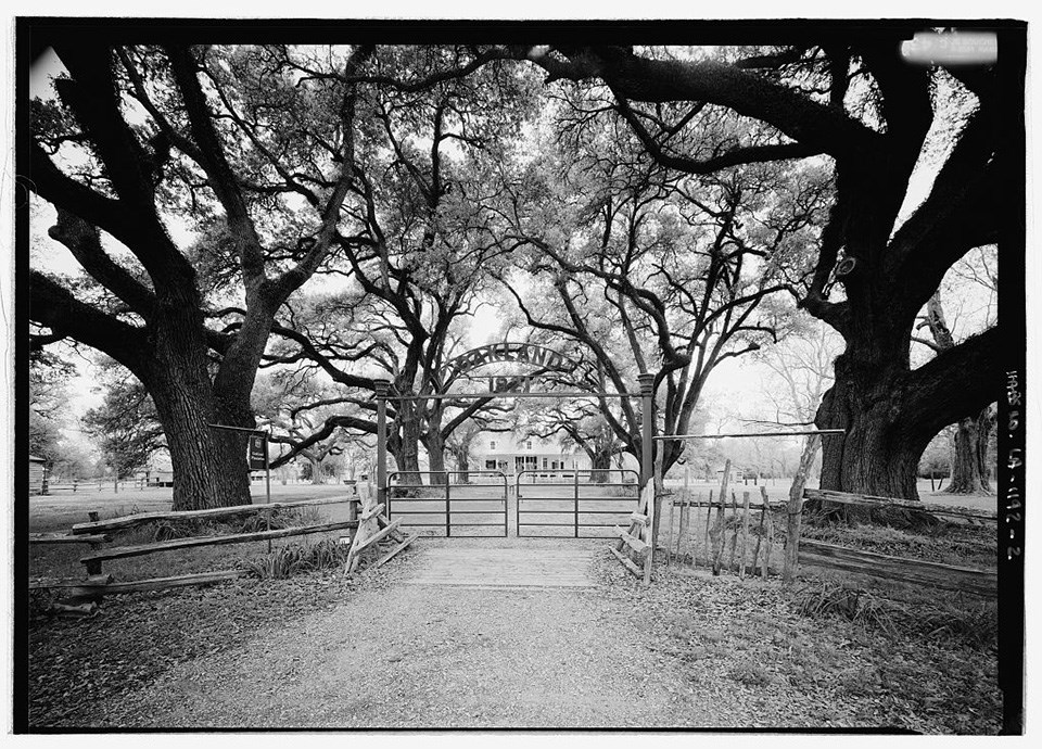 Branches of mature trees arch over each side of a driveway leading to a plantation house, beyond a metal gate