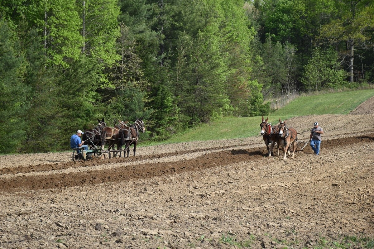 Two teams of horses plow through a dirt field in opposite directions.