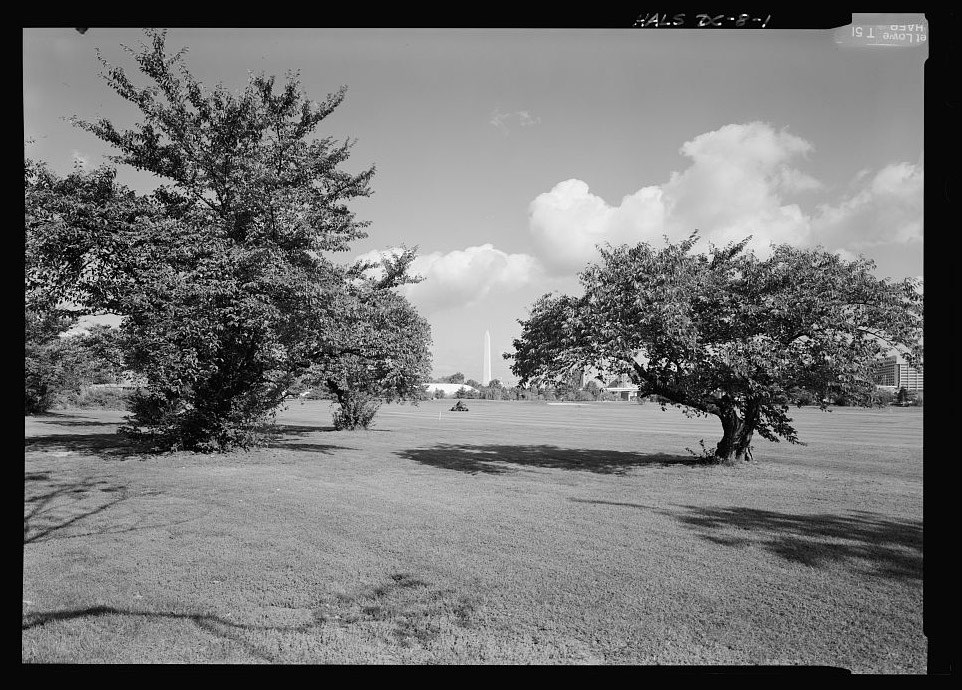 1910 Japanese Flowering Cherry Trees at East Potomac Golf Course (Prunus x yedoensis Witness Tree Protection Program) - Library of Congress