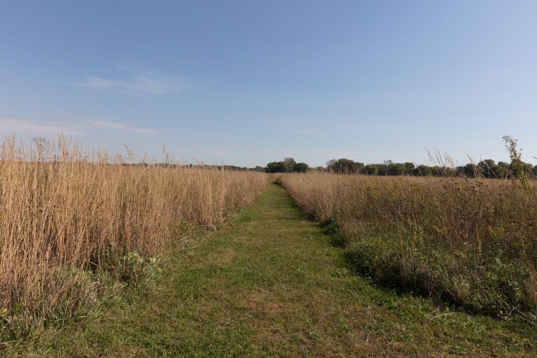 Path cut through tall prairie grass in a level field