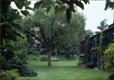 A tall tree grows in the middle of a lush lawn, framed by shubs and a two-story house on the right.