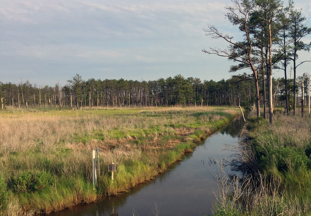 A channel of water divides a marshy area of low grass and thin trees