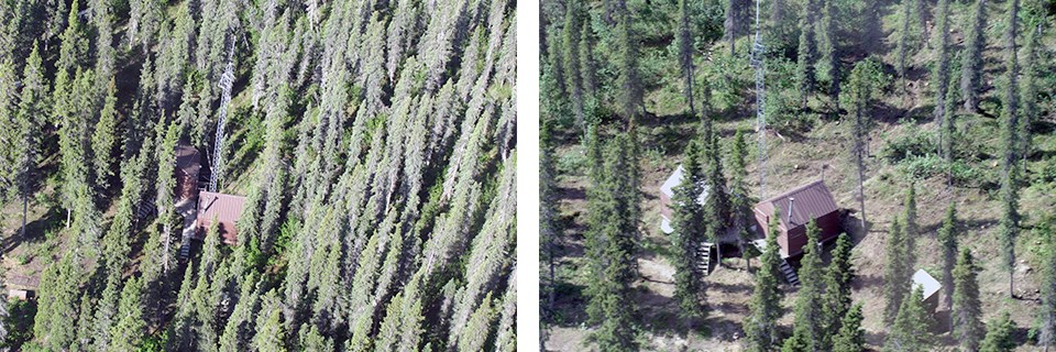 Left: Aerial view of dense trees surrounding cabin; right: trees have been thinned.