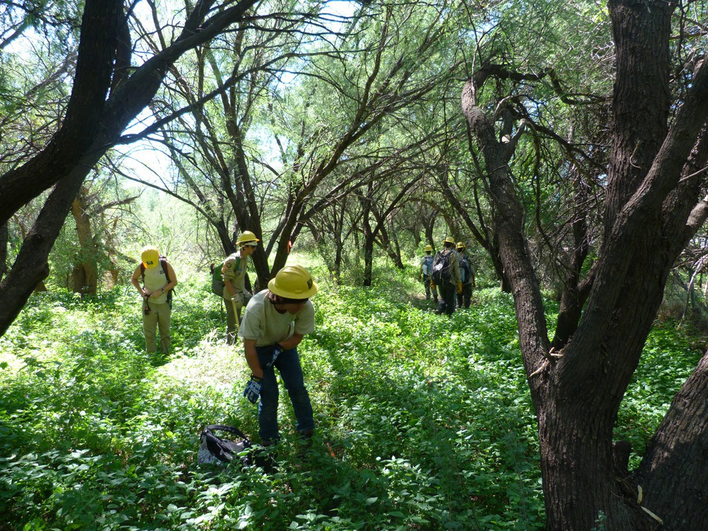 Southwest Conservation Corps sawyer crew helps to reduce fuel load.