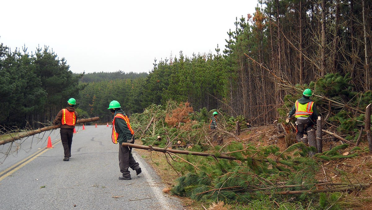 Crew members, wearing hard hats and orange vests, carry trees out from the forested area adjoining a road.