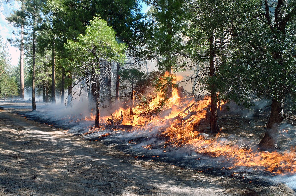 Fire burns on a small tree-covered hillside next to a gravel road.