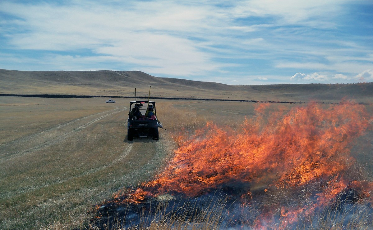 Firefighters head toward a small hill in a utility vehicle lighting grasses using a drip torch.