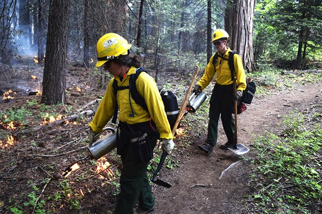 Two firefighters with driptorches ignite vegetation along a path.